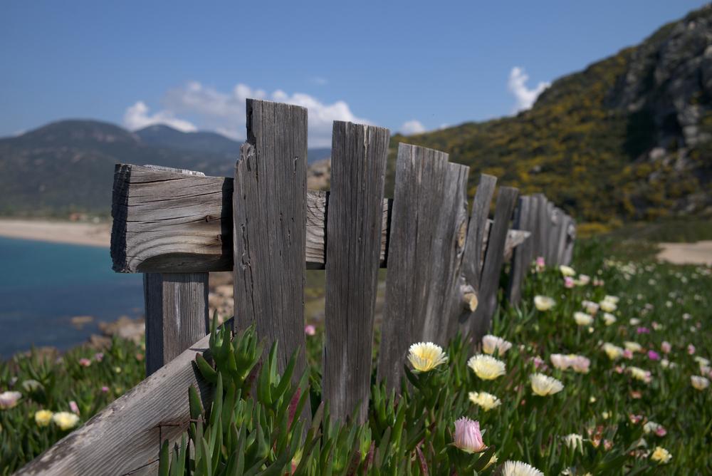 Blumenmeer: Leica M mit Summicron 35 mm @ 4.0.
