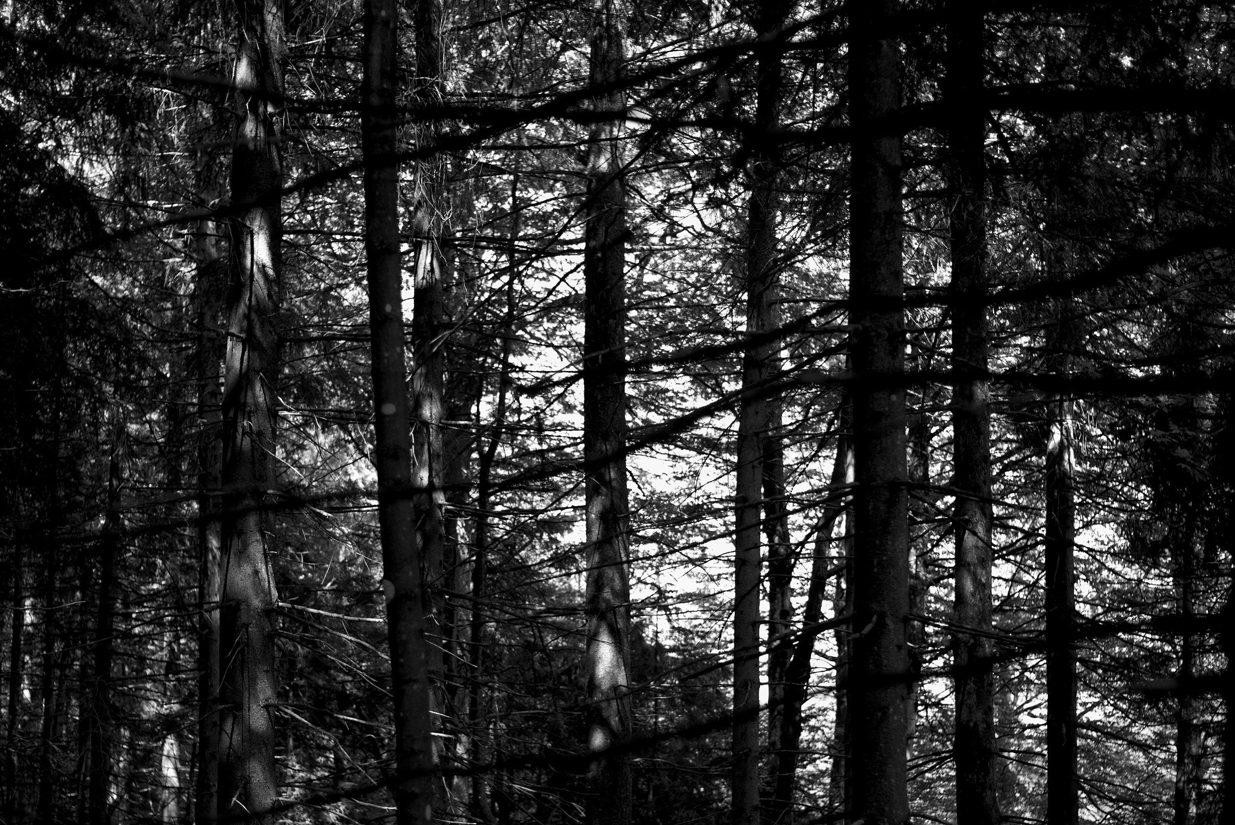 Jazz im Wald. Fotografiert mit Leica M und Summicron-M 35 mm @ f/2.0.