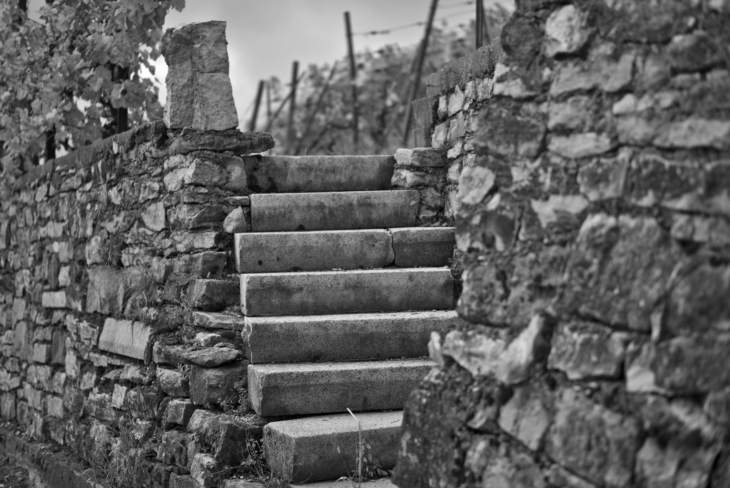 Treppe zum wein. Fotografiert mit Leica M und Summilux-M @ f/1.4.