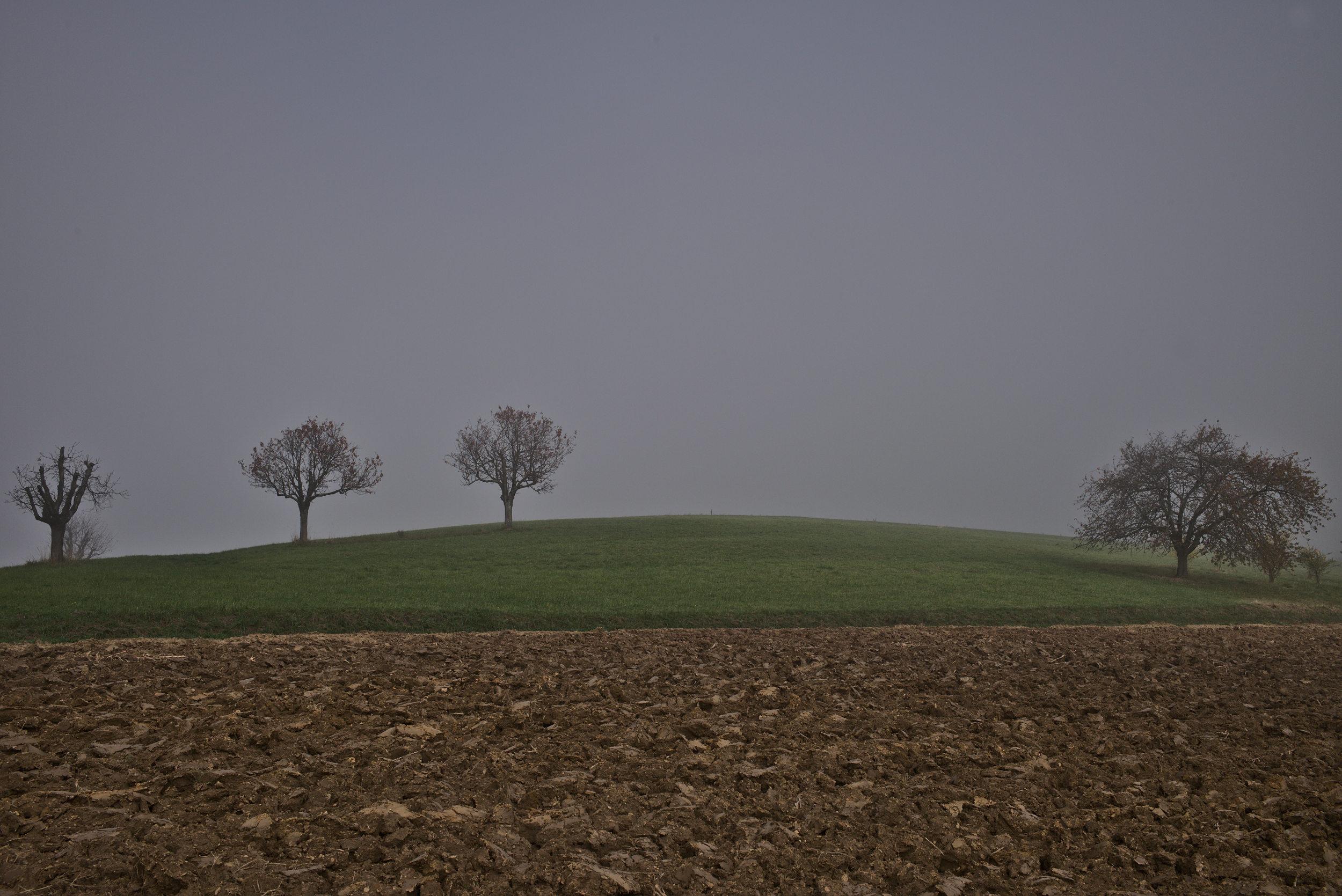 Die 4 - fotografiert mit Leica M und Summicron-M 35 mm @ f/6.0.